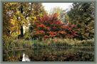 Herbstimpression von Marliese B.