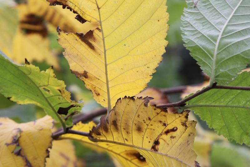Herbstimpression - I