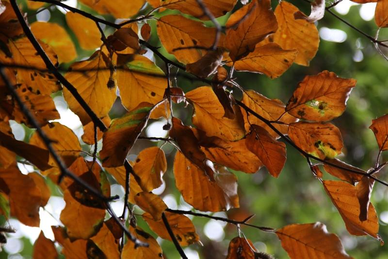 Herbstimpression - II