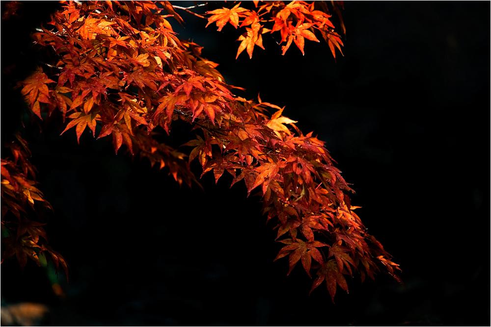 Herbstimpression II