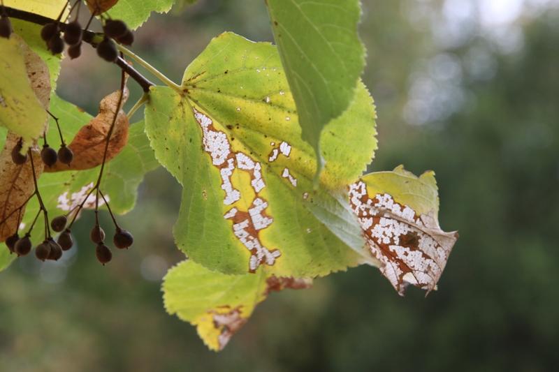 Herbstimpression - IV