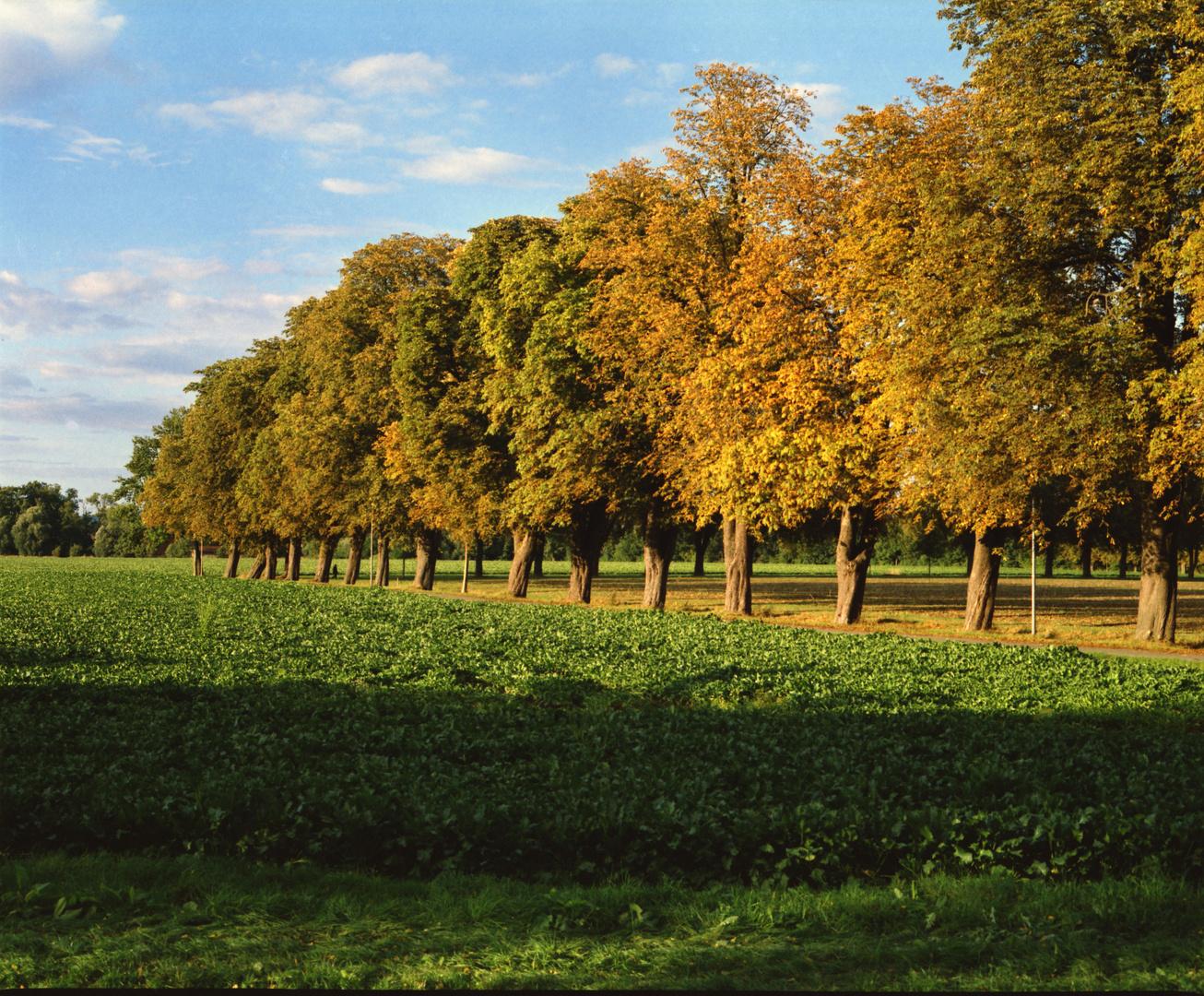 Herbstimpression Löhne - Oberbeck