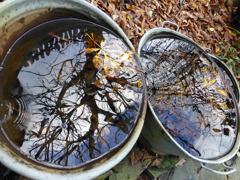 Herbstimpression unter unserem Kastanienbaum