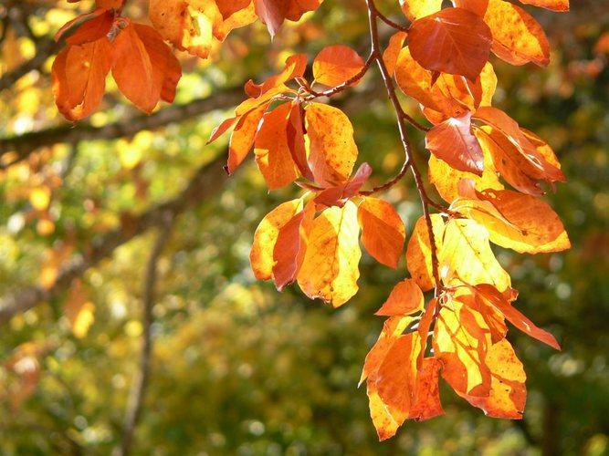 Herbstimpression02