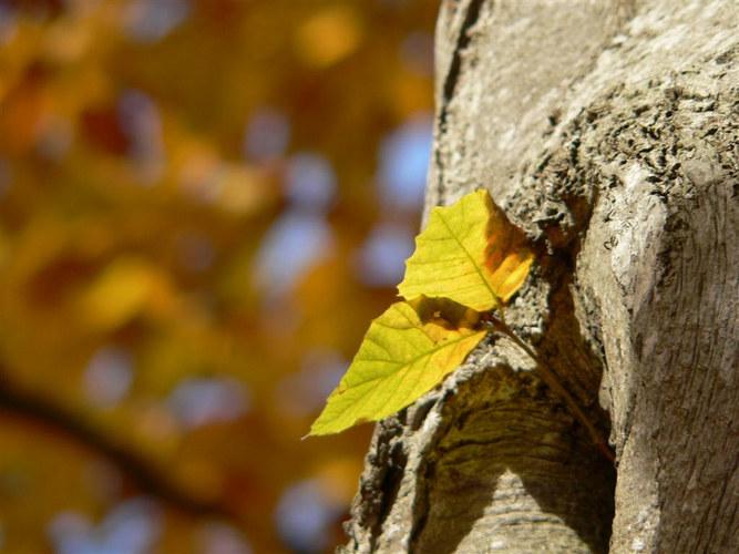 Herbstimpression03