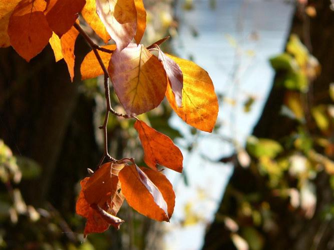 Herbstimpression05