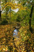 Herbstimpression2