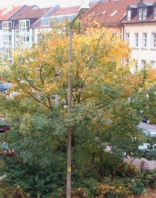 Herbstimpressionen 01