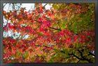 Herbst.Impressionen 09