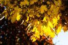Herbstimpressionen #1