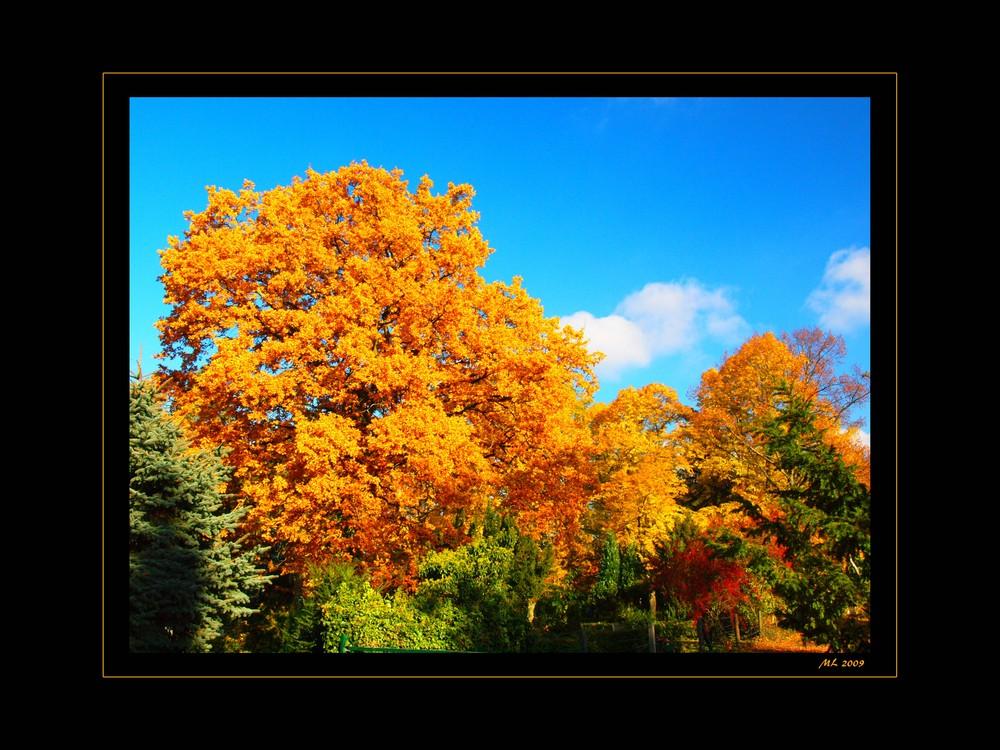 Herbstimpressionen 10