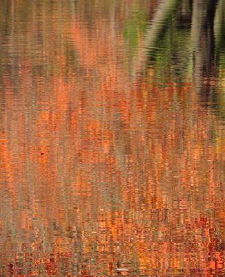 #...Herbstimpressionen.........#
