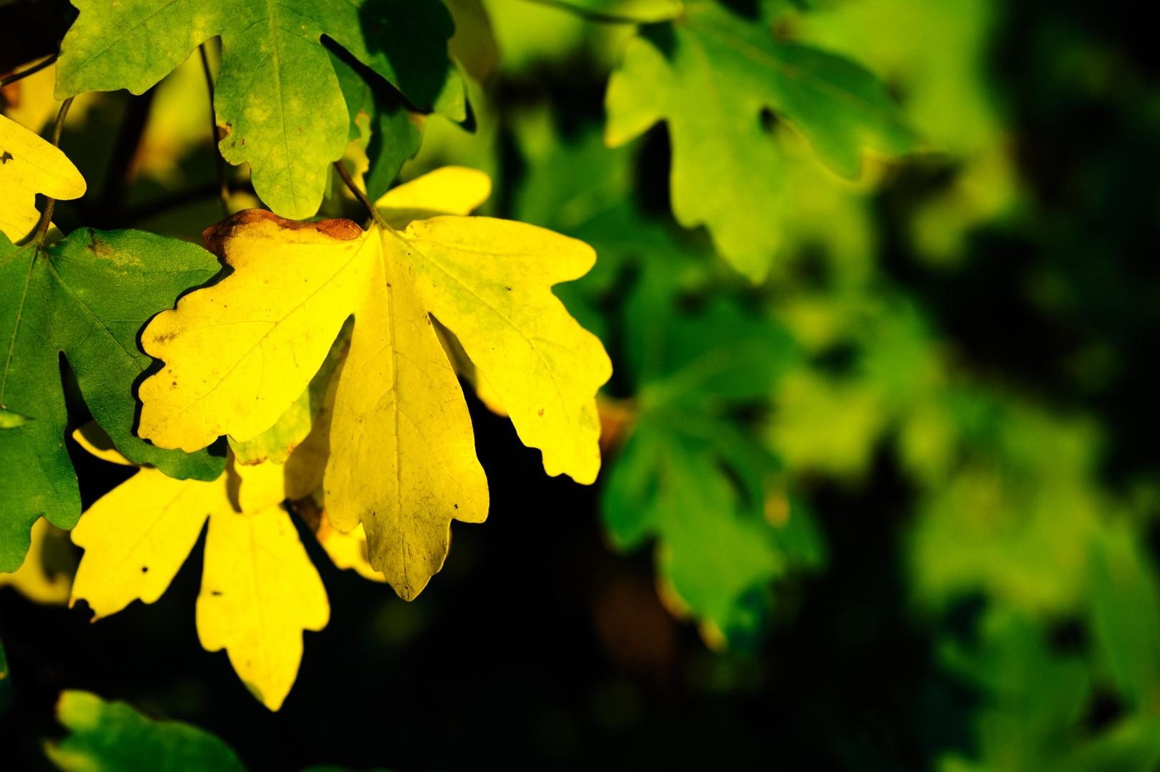 Herbstimpressionen #2
