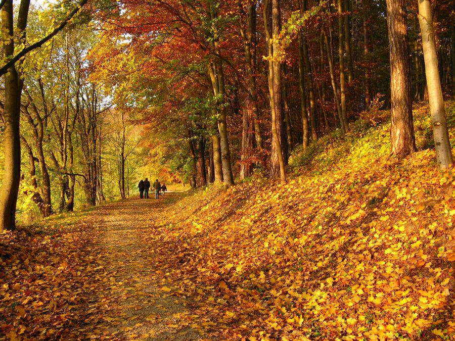 Herbstimpressionen 2007