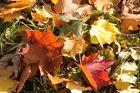 Herbstimpressionen 3
