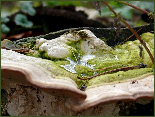 Herbstimpressionen 4 - Die Natur hat gekocht