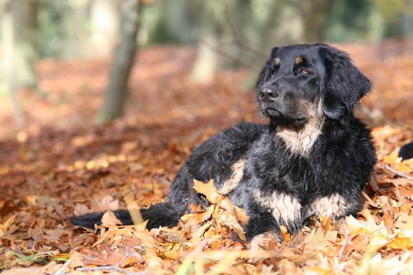 Herbstimpressionen.......