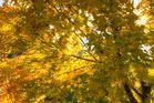 Herbstimpressionen I