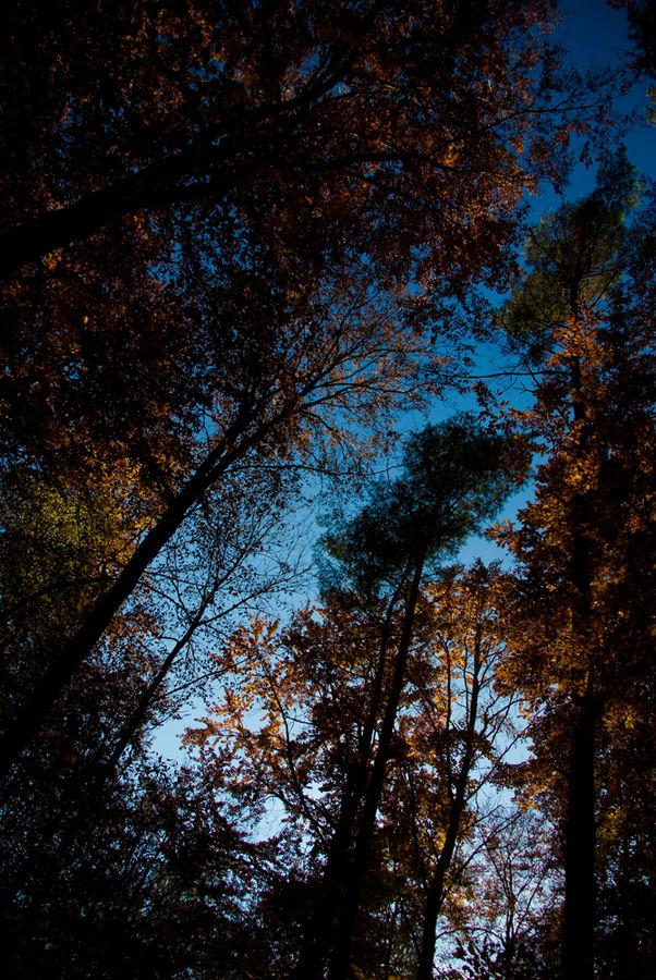 Herbstimpressionen II