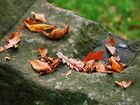 Herbstimpressionen IV