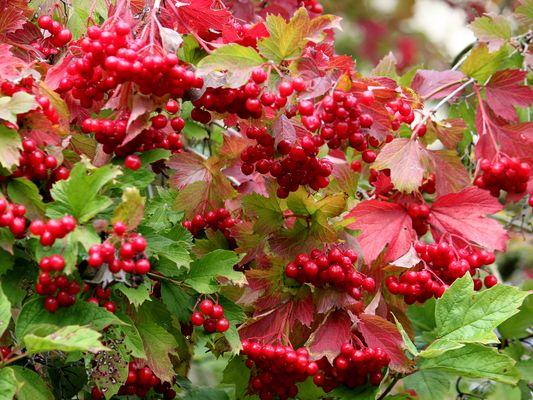 -Herbst...jetzt wird es bunt-