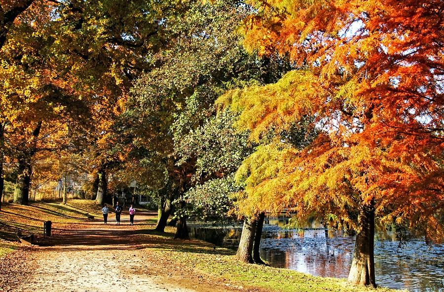 Herbstjogger....