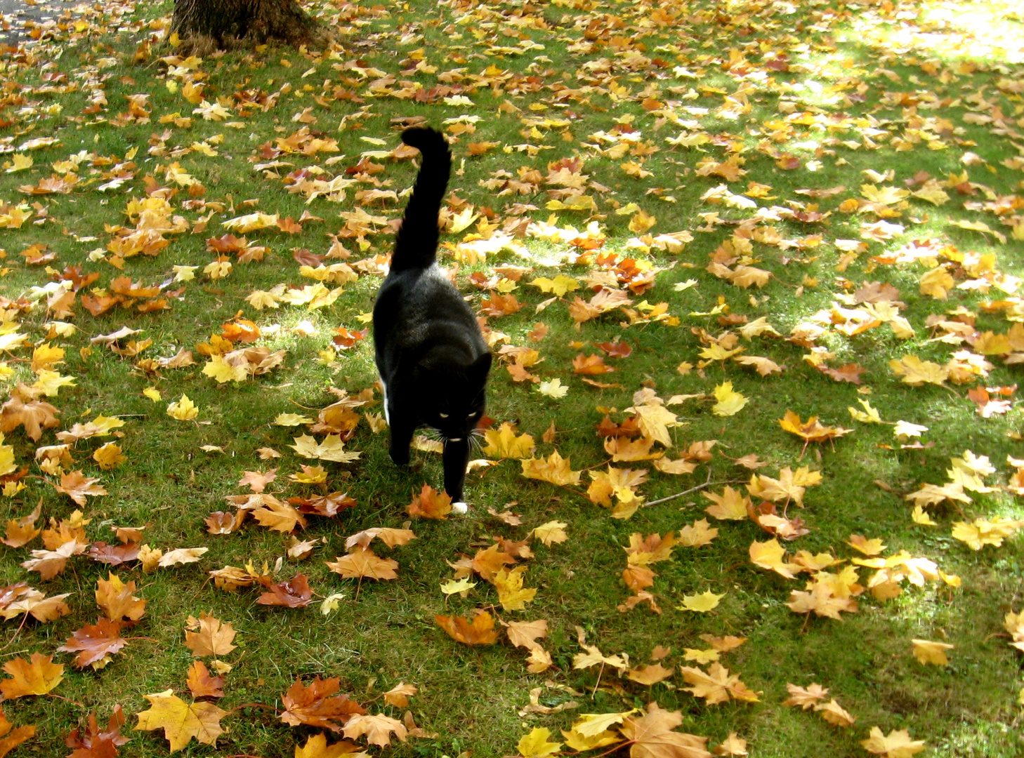 Herbstkater