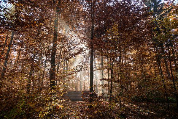 *** Herbstkleid ***