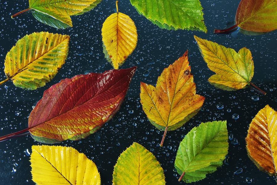 Herbstkomposition