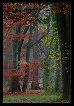 Herbstkontraste *
