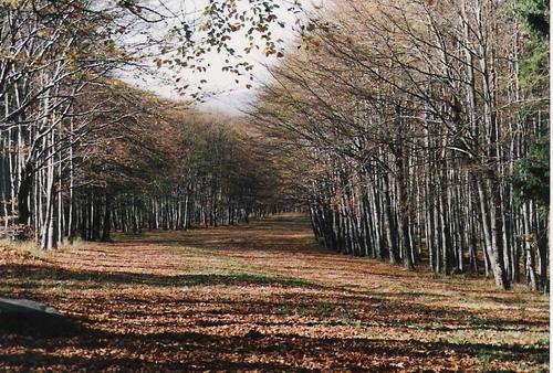 """Herbstkorridor"""