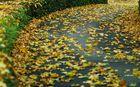 Herbstkurve