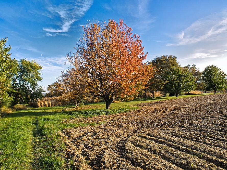 Herbstlandschaft-10