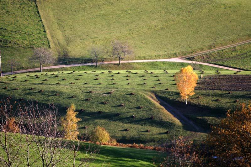 Herbstlandschaft mit Birke