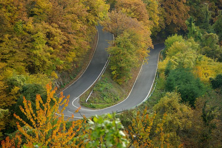 Herbstlandschaft (Straße zur Ehrenburg bei Brodenbach)