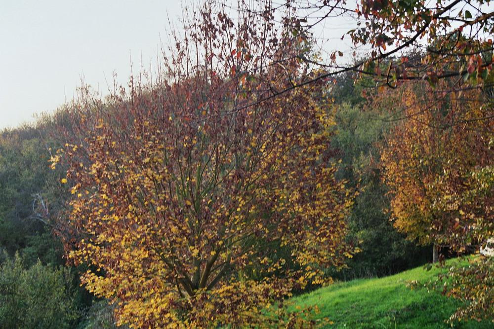Herbstlanschaft
