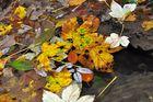 Herbstlaub...