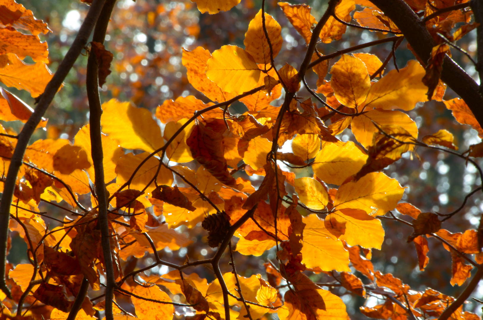Herbstlaub 03