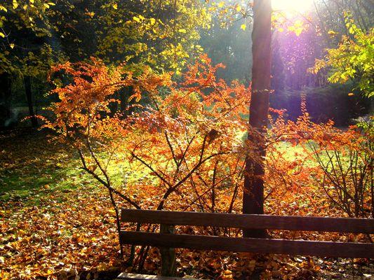 ...Herbstlaub...