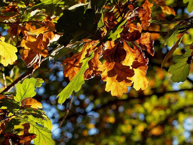 Herbstlaub #1