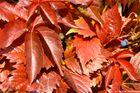 Herbstlaub (1)