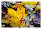 Herbstlaub 2