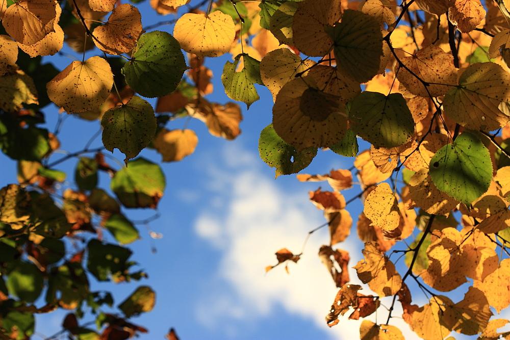 *Herbstlaub (2)*