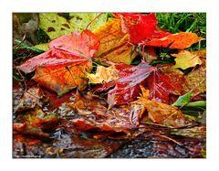 Herbstlaub....