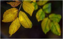Herbstlaub