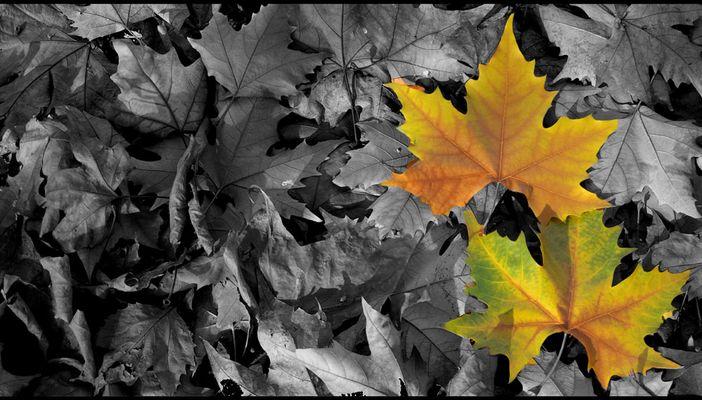 ...Herbstlaub..