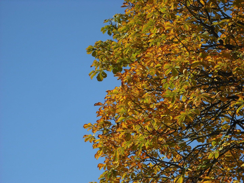 Herbstlaub am blauen Himmel