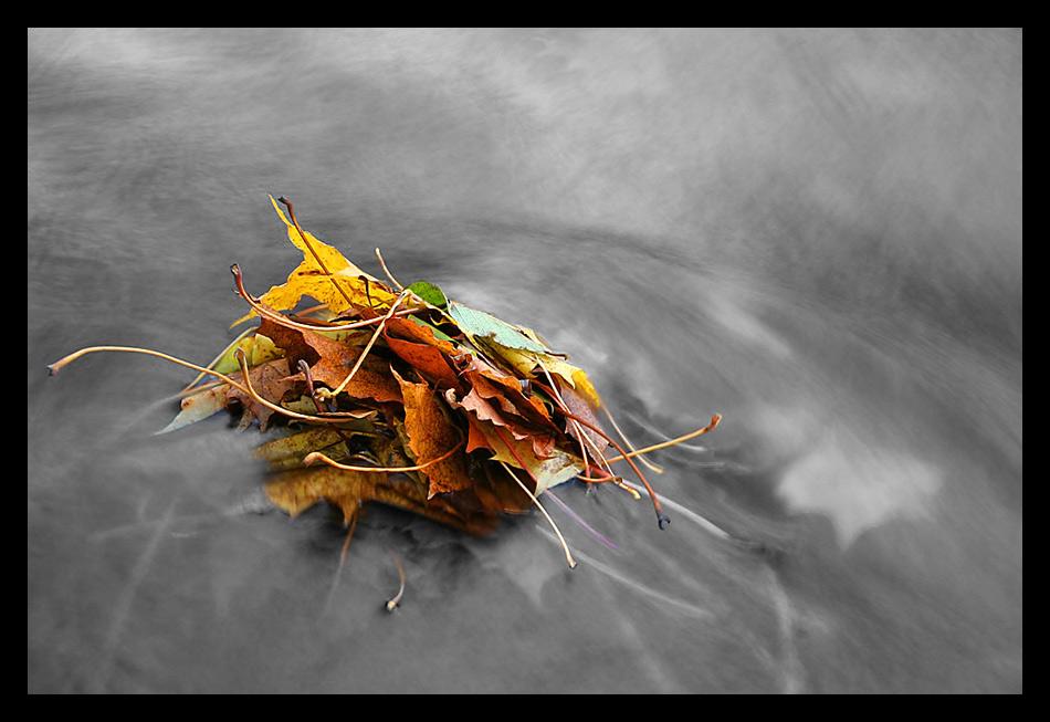 Herbstlaub am Möhnesee