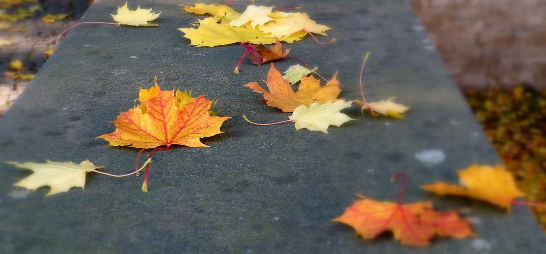 Herbstlaub auf der Mauer