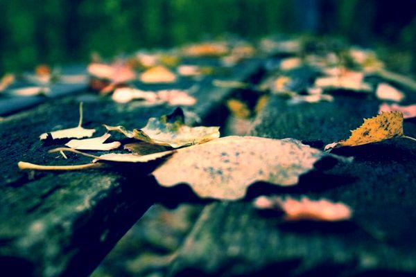 Herbstlaub auf Parkbank